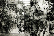 Divina Wallpaper